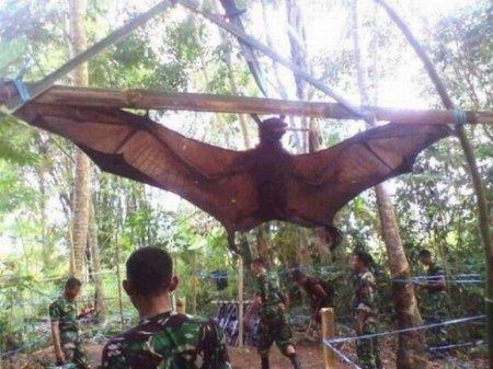 Ученые испугались создания изглубин джунглей